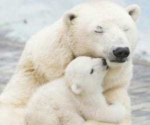 animal, bear, and cute image