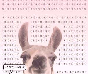 llama, wallpaper, and background image