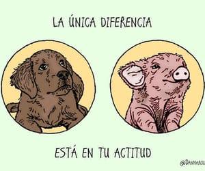 animals, veganism, and veganismo image