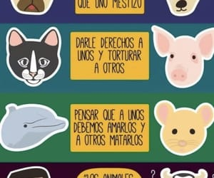 animals, pets, and vegan image
