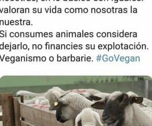 vegan, vegano, and animales image
