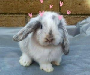animal, bunny, and hearts image