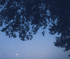 blue, leaves, and moon image
