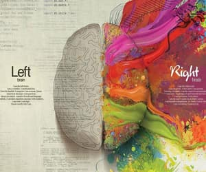 brain, left, and Right image
