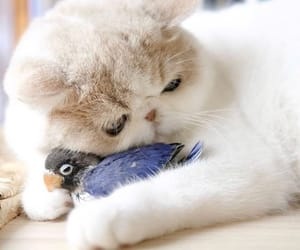 animal, cat, and friendship image