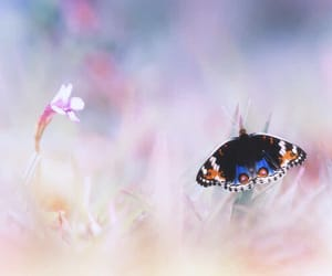 butterfly, pastel, and nature image