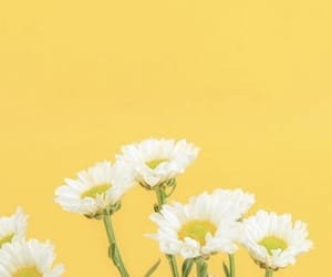 wallpaper, flowers, and yellow image
