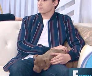 dog, gif, and tom holland image