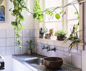 green, home, and plants image