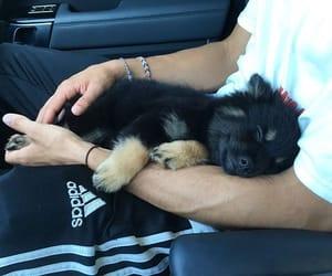 dog, cute, and adidas image