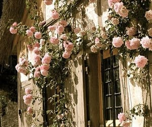 rose, flowers, and window image