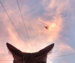 cat, high, and nice image
