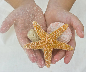 coral, photography, and starfish image