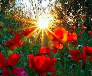 flowers, sunset, and garden image