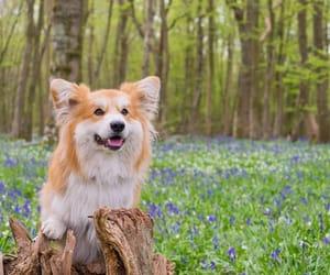 corgi, dog, and flowers image