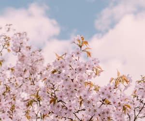 aesthetic, beauty, and sakura image
