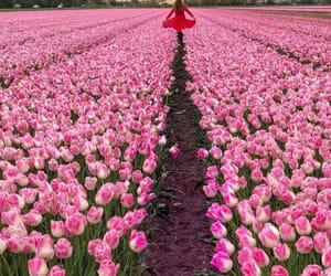 amazing, amsterdam, and flowers image