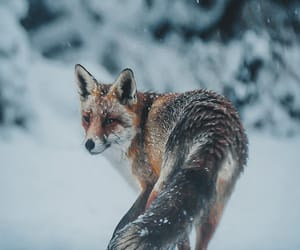 snow, winter, and animals image