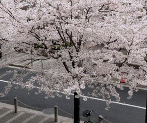 flowers, street, and tree image