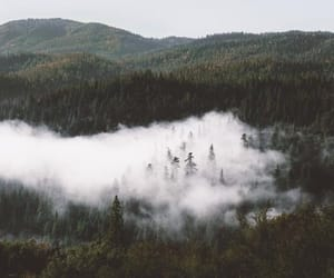 forest, inspo, and nature image