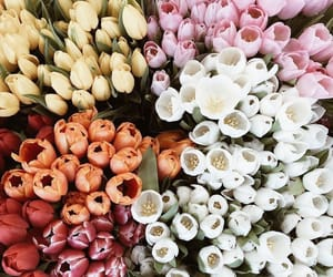 flowers, aesthetic, and life image