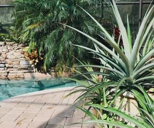 backyard, florida, and green image