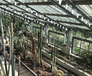 amazing, cactus, and gardens image