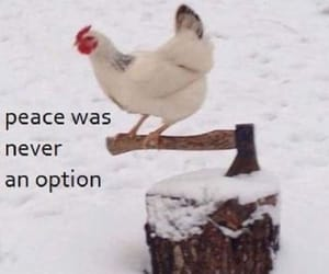 Chicken, funny, and lol image