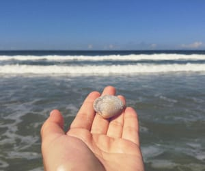 beach, indie, and shell image