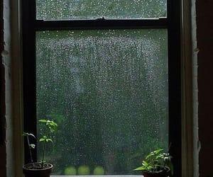 rain, window, and plants image