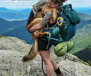 adorable, adventure, and dog image