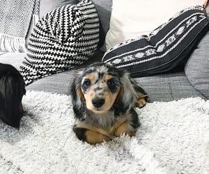 animal, cutie, and love image