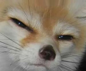 is, best fennec, and mood image