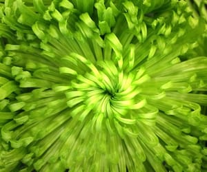 flowers, lime, and green image