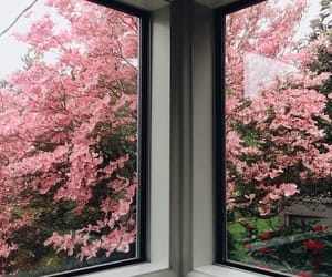 flowers, pink, and window image