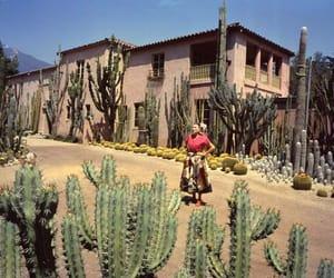 architecture, cacti, and cactus image