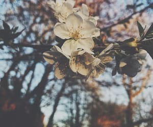 flower, 🌸, and spring image