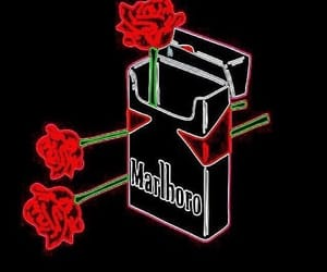 rose, red, and cigarette image