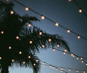 light, palm trees, and night image