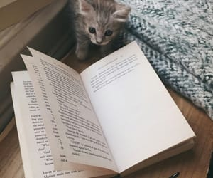 aesthetic, animal, and book image