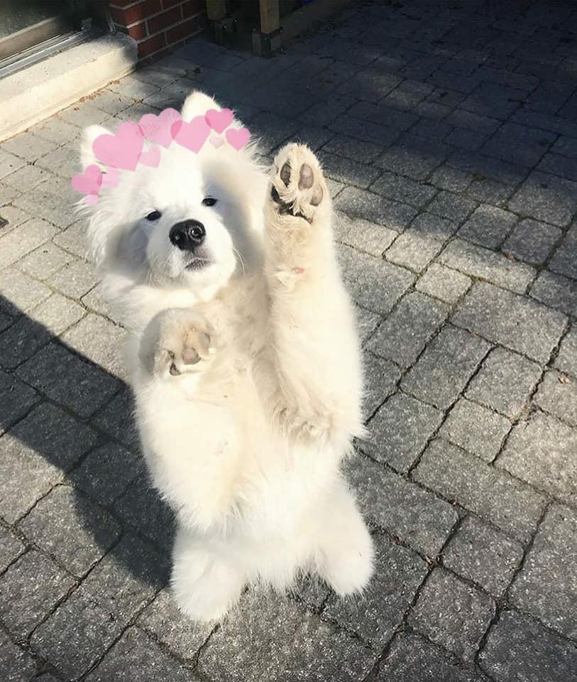 dog, white, and baby image