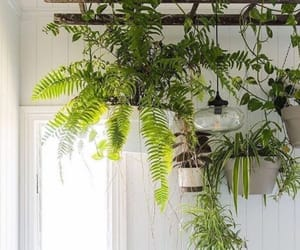 hanging, plant, and plants image