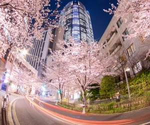 asia, cherry blossom, and places image