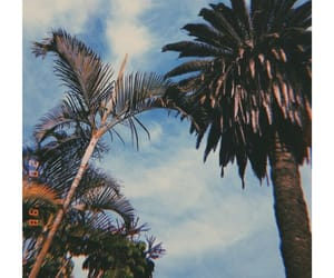 goals, love, and palms image