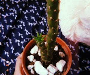 blue, cactus, and cutest image