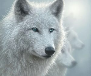 art, wolf, and white image