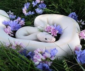 snake, animal, and flowers image