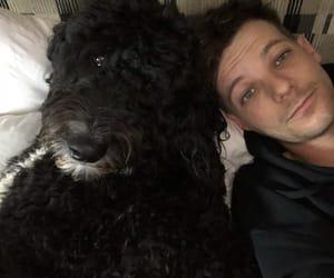 dog, louis tomlinson, and louis image