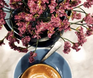 coffee, flower, and follow image