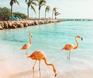 beach, sea, and flamingo image